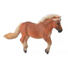 Shetland poney