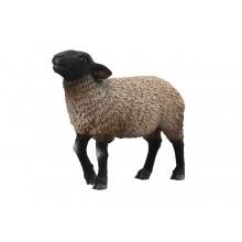 Suffolk mouton