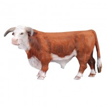 Animaux Taureau Hereford