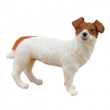 Animaux Jack Russel Terrier