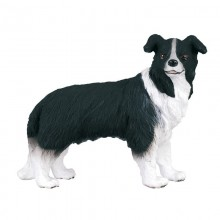 Animaux Border collie