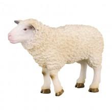 Animaux Mouton